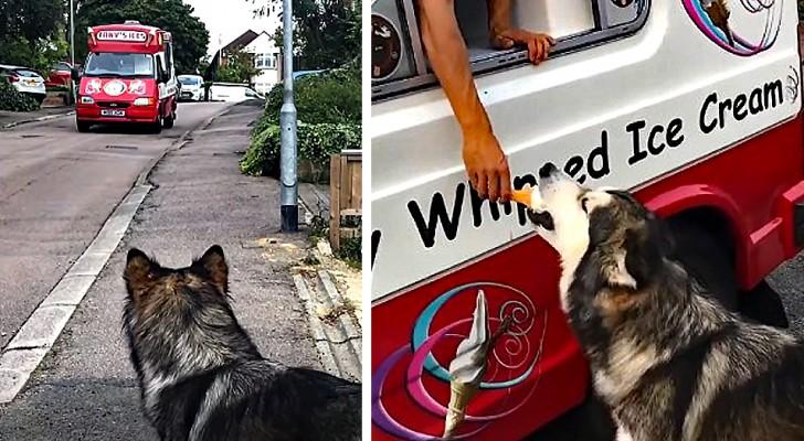 Chaque jour, cette chienne attend la camionnette des glaces devant la maison pour prendre une pause savoureuse
