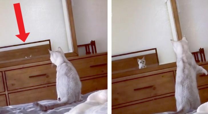 Questo gattino vede le sue orecchie riflesse su uno specchio per la prima volta e pensa che sia un