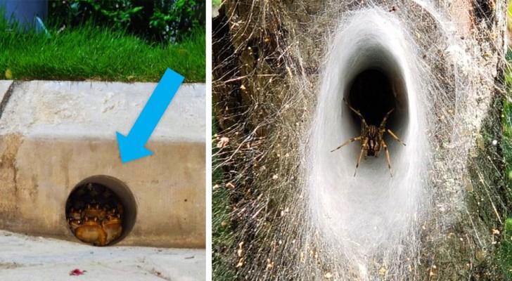 20 volte in cui Madre Natura ha mostrato il suo lato più terrificante
