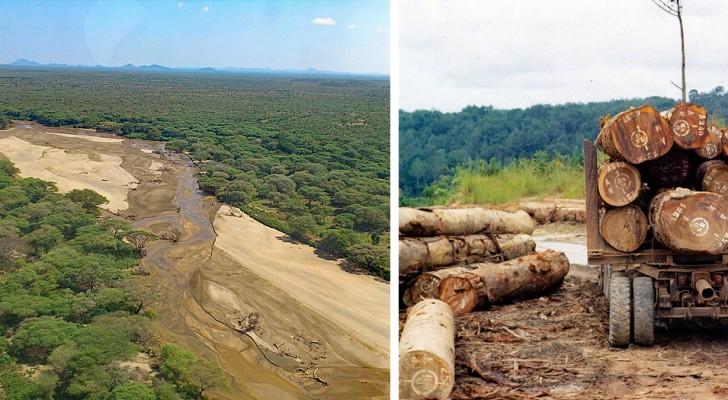 Il Sud Sudan pianterà 100 milioni di alberi in 5 anni per combattere la deforestazione: siglato l'accordo con la FAO