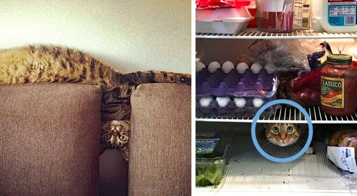 15 Fotos von Katzen, die in den seltsamsten und lustigsten Situationen geknipst wurden