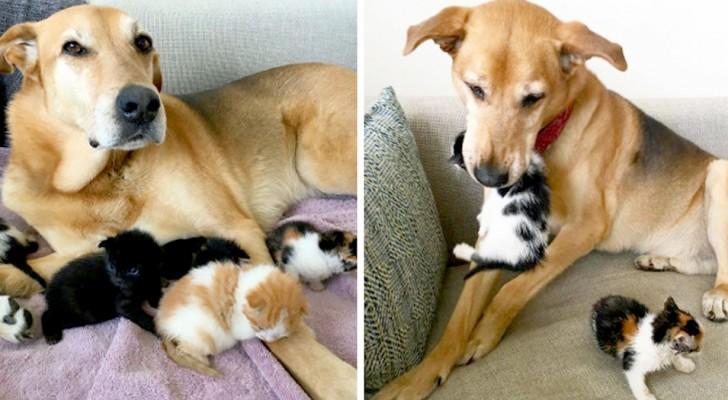 Uma doce cachorrinha cuida dos gatos abandonados em um abrigo como se fosse mãe deles