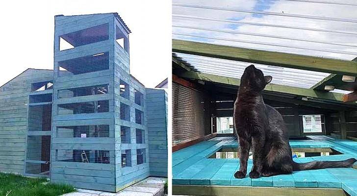 Ein junger Mann baut für seine Katzen eines der beeindruckendsten und denkwürdigsten