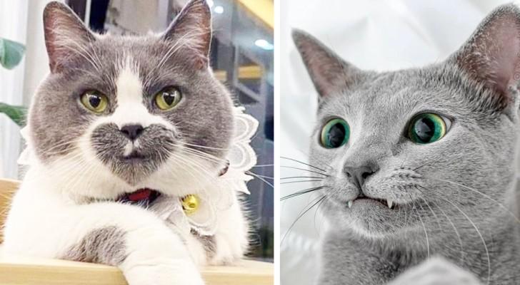 22 gatti che Madre Natura ha dotato di
