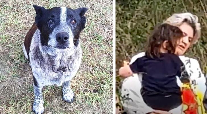Um velho cão surdo e cego protege uma menina de 3 anos perdida na floresta, ajudando os socorristas a encontrá-la