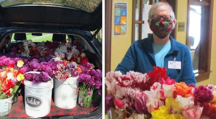 Tulpanfestivalen ställs in på grund av covid-19, organisationen donerar hundratals blommor till ett ålderdomshem