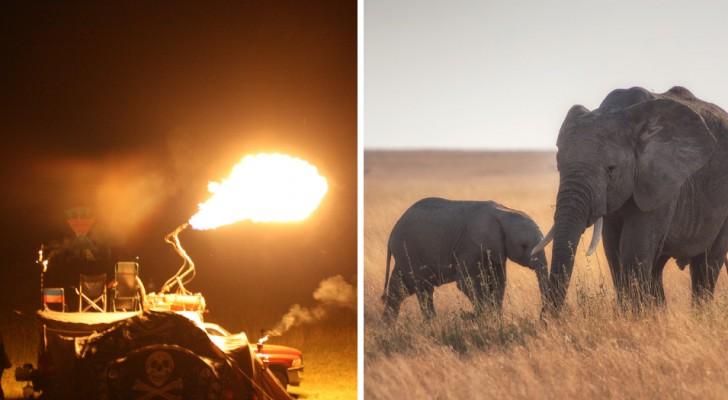 Ein Elefant und sein Welpe werden vom Feuer verjagt: Die Abholzung hatte sie in Richtung der bestellten Felder getrieben