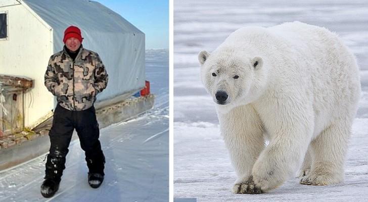 40 000 euros pour un voyage à la recherche d'ours polaires à tuer : l'offre macabre de certains tour opérateurs