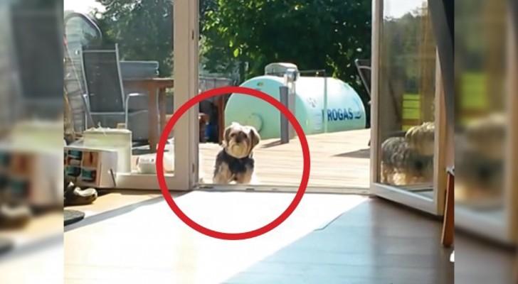Sobald ihr versteht, warum dieser Hund nicht ins Haus kommt, werden ihr vor Lachen brüllen!