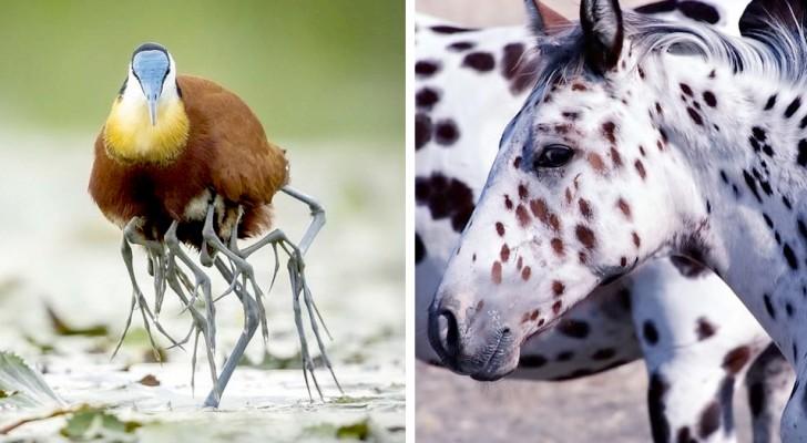 15 animaux si absurdes qu'on dirait qu'ils sortent d'un film de science-fiction