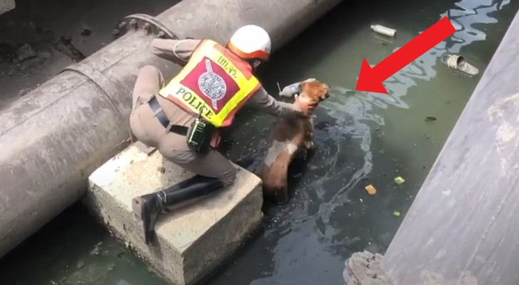 A police officer puts his life at risk to save a dog who had fallen and became entrapped in a canal