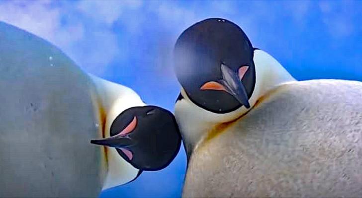 """Antarctica: twee pinguïns """"maken"""" een selfie, geïntrigeerd door de camera van een onderzoeker"""