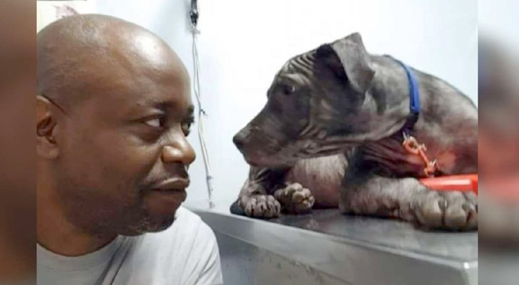 A man saves a dog's life: dog thanks him with an intense look of gratitude on his face