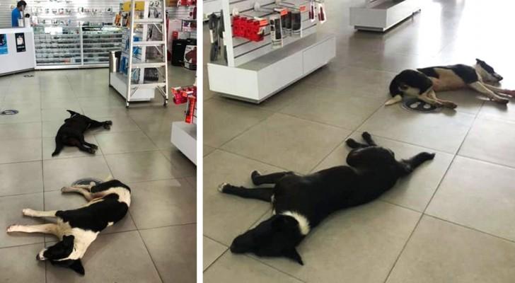 Une femme laisse les chiens errants entrer dans son magasin pour se reposer et se rafraîchir avec de l'eau et de la nourriture