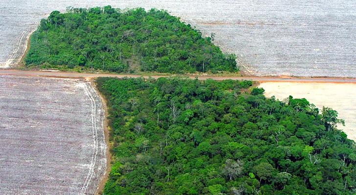 Deforestazione: nel 2019 abbiamo perso l'equivalente di un campo da calcio ogni 6 secondi