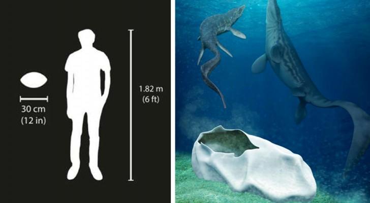 Scoperto in Antartide un uovo fossile grande come un pallone da calcio: ha 66 milioni di anni