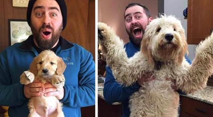 De filhote a cachorro: 10 fotos engraçadas mostram quão rápido nossos amigos de quatro patas crescem