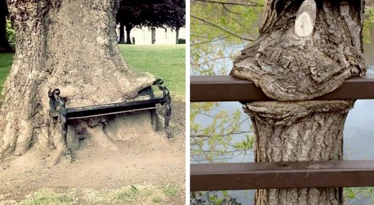 15 Bäume, die nicht anders konnten, als alles vor sich aufzufressen