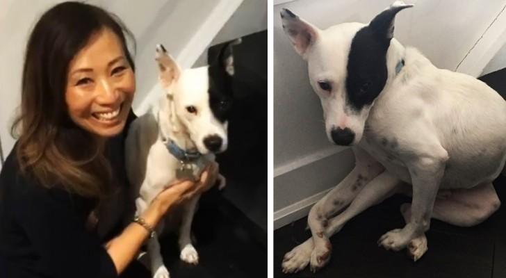 Sconfigge la sua paura dei cani adottando un cagnolino che ha paura degli umani: oggi la loro amicizia è unica