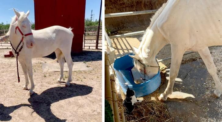 Langs de kant van de weg wordt een ondervoed paard gevonden: nu woont hij zorgeloos op een ranch met zijn soortgenoten
