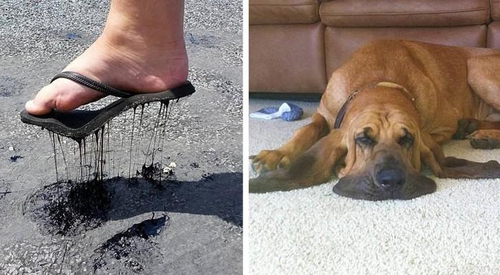 14 foto che mostrano al meglio gli effetti del caldo rovente su cose, animali e persone