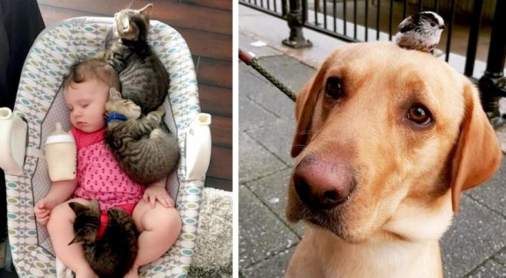 15 foto che dimostrano quanto i nostri amici a 4 zampe abbiano da insegnare agli esseri umani
