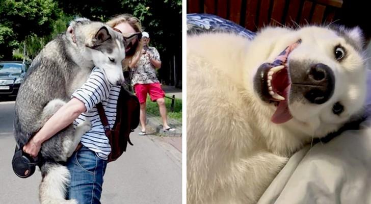 15 foto che dimostrano quanto gli husky siano tra i cani più teneri e divertenti al mondo
