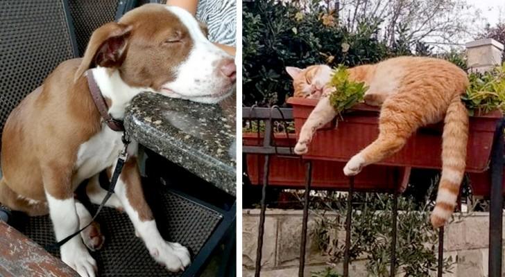 15 animali domestici che si sono addormentati nei posti e nelle posizioni più impensabili
