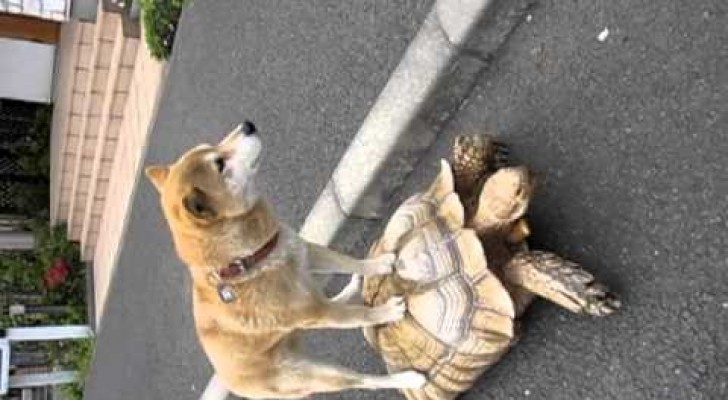 Have you ever seen a dog getting a lift in town by a turtle ?