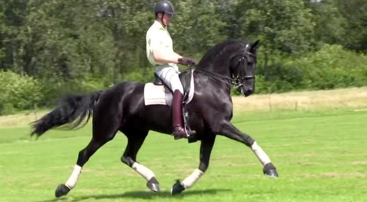 La bellezza e l'eleganza di questo cavallo vi lasceranno a bocca aperta
