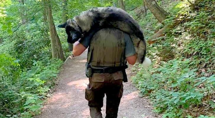 Een moedige ranger draagt een hond op zijn schouders om hem te beschermen tegen uitdroging