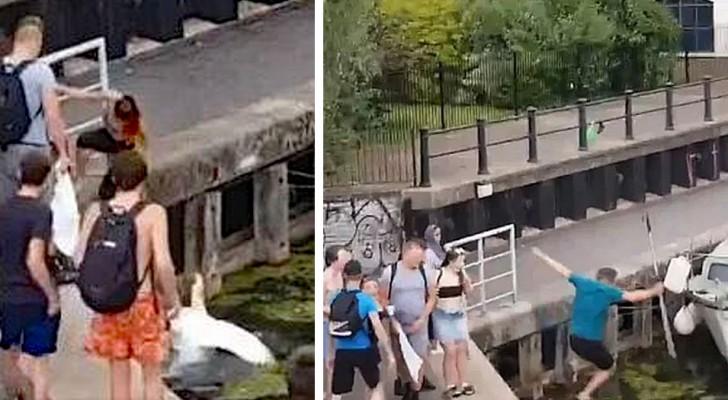 Een man wordt in het water geduwd terwijl hij probeert zwanen te beschermen tegen een meisje dat ze had geschopt