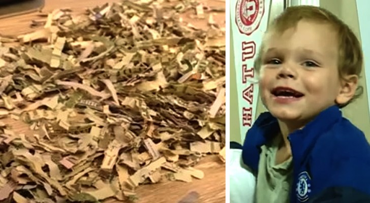 They desperately searched for an envelope containing $1000 only to find that their son destroyed it in the shredder