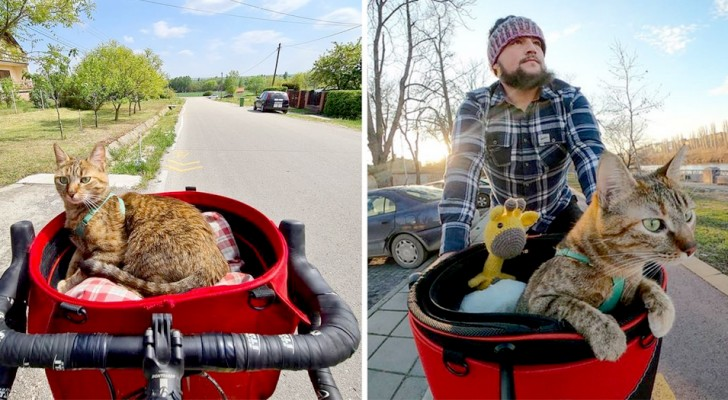 En kille hittar en övergiven kattunge under en cykelresa och nu reser de genom världen tillsammans
