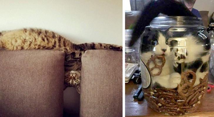 20 gatti talmente flessibili che sembrano fatti di materiale liquido