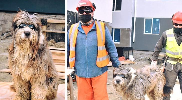 Um cachorro vira-lata faz amizade com um grupo de pedreiros no canteiro de obras: ele agora é o ajudante de quatro patas