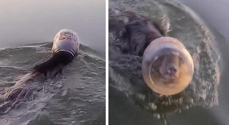 Paar rettet Bären-Junges, das mit dem Kopf in einem Plastikbehälter fast ertrunken wäre