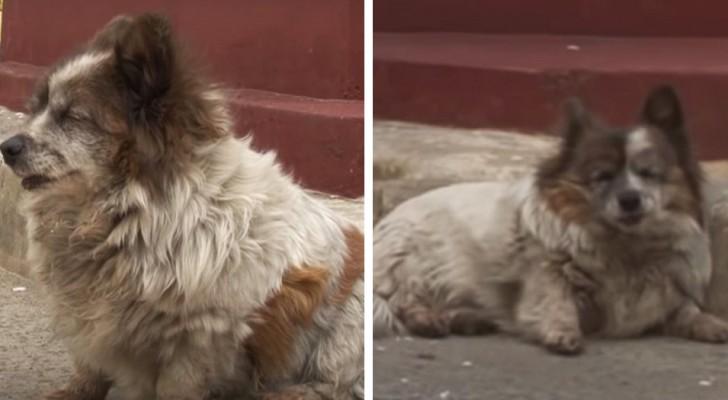 Cette vieille chienne attend le retour de son maître depuis 10 ans. Il lui a dit :