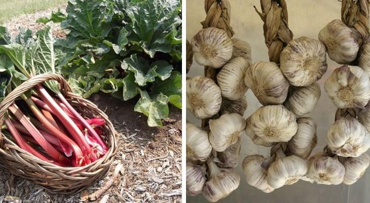 Le varietà di ortaggi ed erbe aromatiche pluriennali che non bisogna ricomprare ogni anno