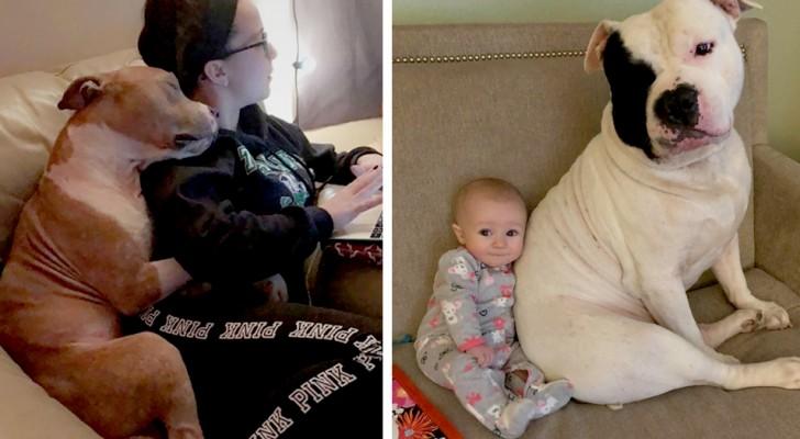 15 djur som blivit adopterade och betalat tillbaka sina ägare med gos och leenden