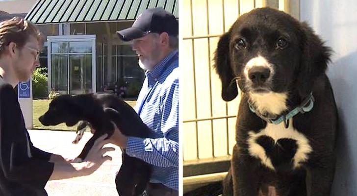 Uma família esperou 27 horas em frente a um refúgio para adotar uma doce cachorrinha com um coração desenhado no peito