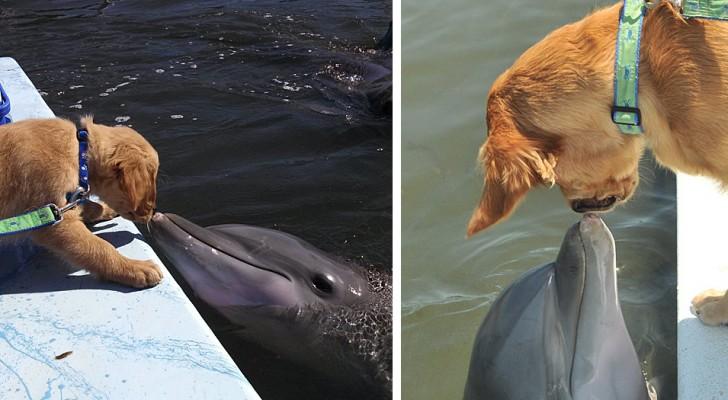 Den söta vänskapen mellan en golden retriever och en delfin som är oskiljaktiga sedan hunden bara var en liten valp