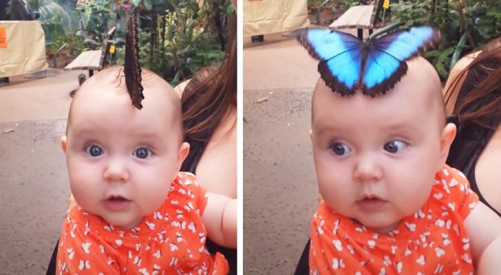 Os pais conseguem capturar o momento mágico em que uma borboleta azul gigante pousa na cabeça da filha