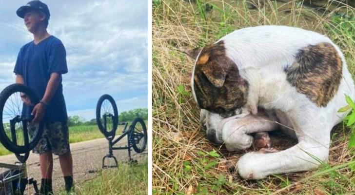 Três meninos de 13 anos salvam um cachorro de rua que não conseguia mais se mexer