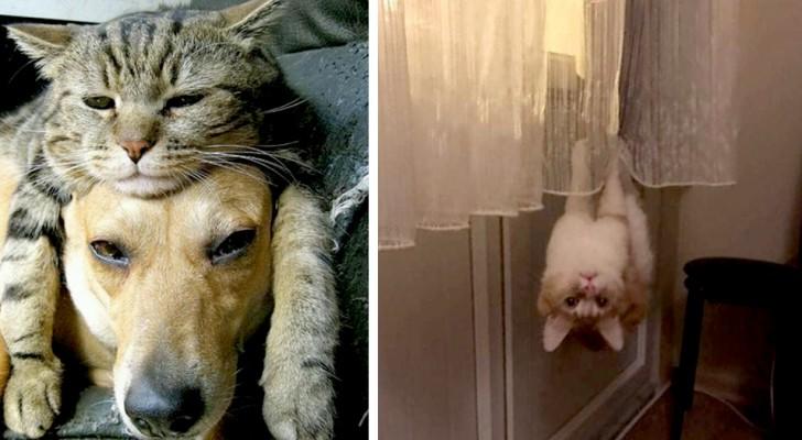 10 animali domestici che hanno fatto sbellicare dalle risate i loro padroni umani