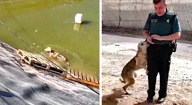 A dog was about to drown in a water reservoir; after police saved him, he can't stop hugging them