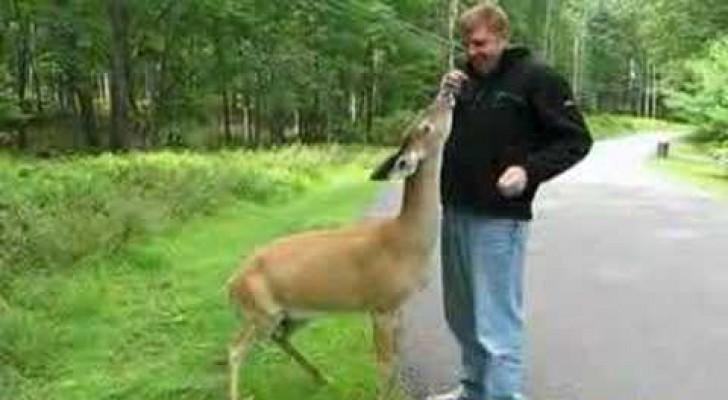 En oväntad vänskap i skogen!