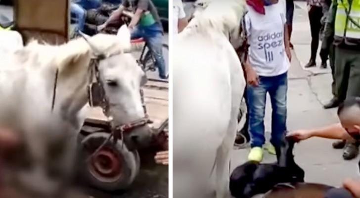 Un cavallo in dolce attesa partorisce in strada mentre è costretto a trainare un carro: denunciato il proprietario
