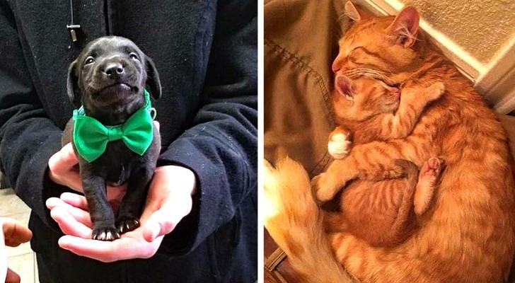 14 foto di animali così teneri da far tornare immediatamente il buonumore