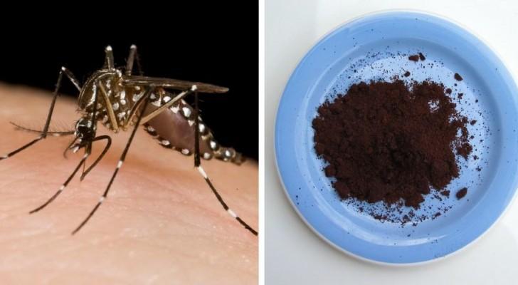 Come usare i fondi del caffè per tenere lontane le zanzare in modo economico e naturale